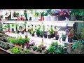 Plant Shopping At Mcguckin