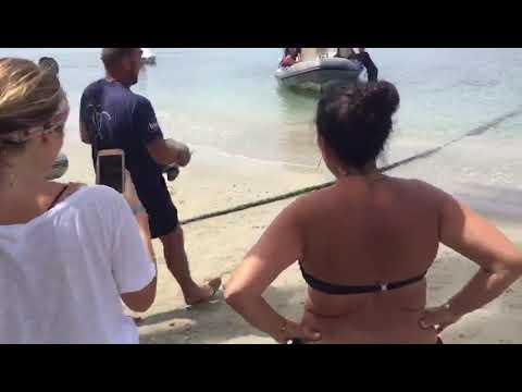 Martinique : tortues marines relâchées