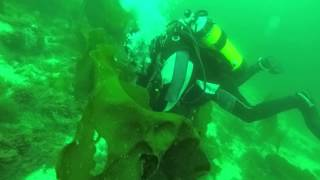 kuvausta veden alla