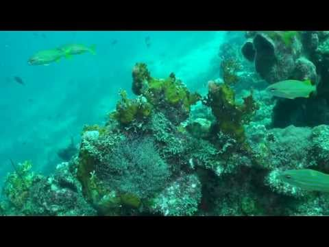 Curacao Dive Adventure II 2012
