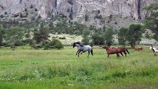 Secret life of Horses