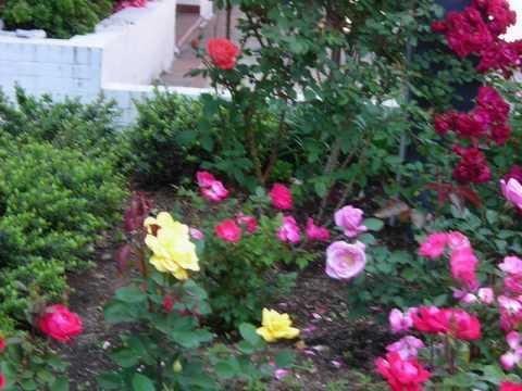 Curso taller de jardineria y paisajismo youtube for Aprender jardineria