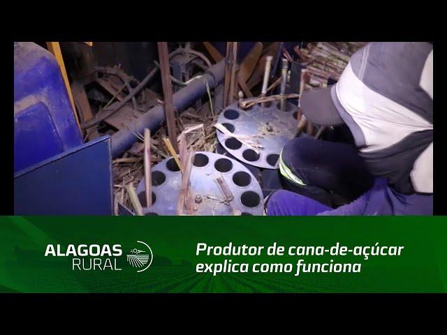 Produtor de cana-de-açúcar explica como funciona o plantio com baixa densidade de gemas