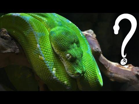 Got Reptiles? Reptile Store Tour!