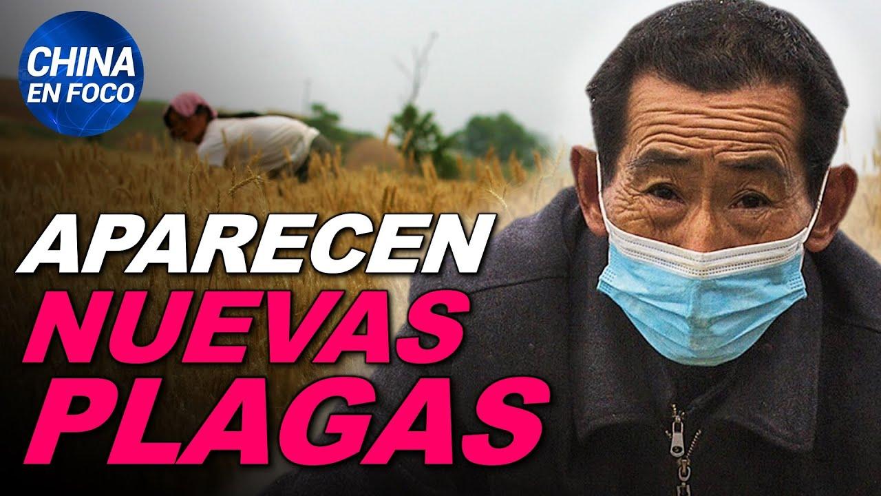 Aparecen nuevas plagas en China. Ciudadanos atacan a portavoz del PCCh | China en Foco