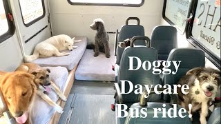 A Day on the Doggy Daycare bus!