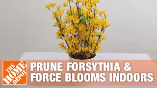 How To Prune Forsythia and Force Blooms Indoors - The Home Depot