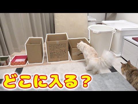 【結局】猫ってどの大きさのダンボールが好きなの?