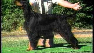 Gordon Setter  AKC Dog Breed Series