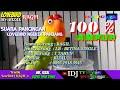 Suara Pancingan Lovebird Ngekek Panjang Love Bird Ragil Betina Single Mr Rizal  Mp3 - Mp4 Download