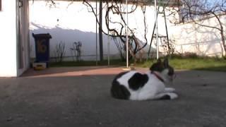 Feline language - Mačji jezik