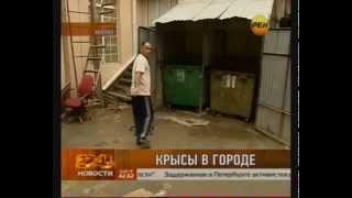 видео Борьба с мышами на участке