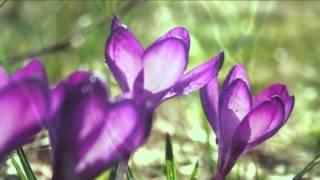 Valsul primăverii-Dmitri Shostakovich _ Waltz No.2