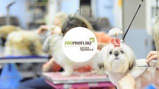 Обучение стрижке собак - Школа груминга ZooProfi