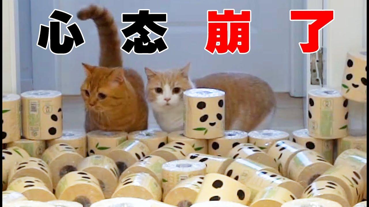【喵来啦】猫咪VS卷筒纸,场面过于混乱!猫:心态崩了...... | 搞笑动物 搞笑猫咪