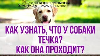 Как узнать, что у собаки течка? Течка у собак - её особенность и этапы протекания