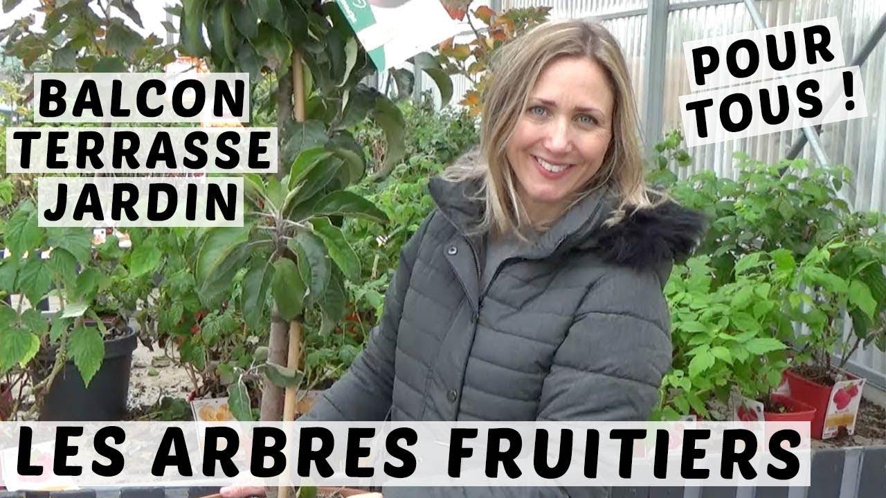 Arbre En Pot Terrasse 🍎 du balcon au jardin : des arbres fruitiers pour tous avec les pepiniÈres  poullain