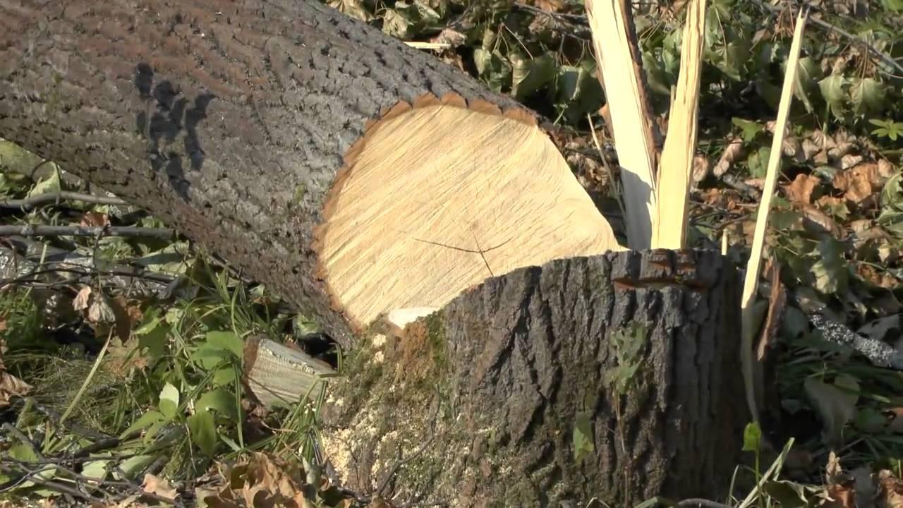Картинки, картинки вырубка деревьев