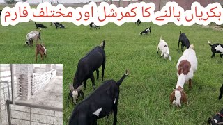 How to start goat farming in Pakistan | Goat farming in Pakistan | Proper goat farm|| گوٹ فارمنگ