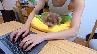 在宅勤務中のパパとママと犬のリアルなモーニングルーティーン【トイプードル】