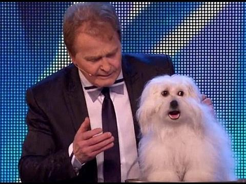 Wendy il fenomenale cane parlante!