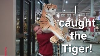Tiger Attacks Girl!