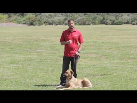Cures for Barking Dogs : Dog Behavior & Training