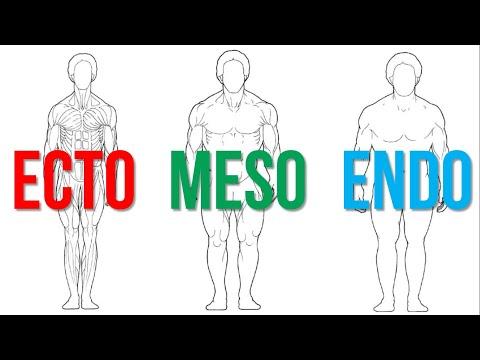 Is Your Body Type Ectomorph, Mesomorph or Endomorph?