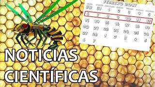 abejas dron para nuestra supervivencia   noticias 13 2 2017