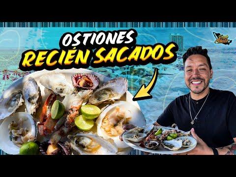 Los Mejores OSTIONES DE MI VIDA con solo $10 pesos   Puerto Peñasco Día 11 #DondeiniciaMexicoLRG
