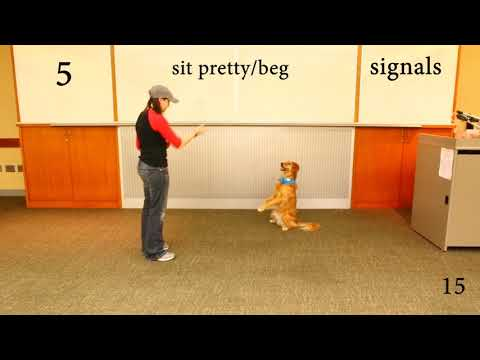Trick Dog Titles (Novice, Intermediate, Advanced,  Expert) - Kova