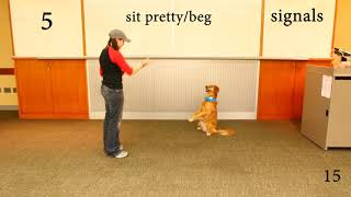 Trick Dog Titles (Novice, Intermediate, Advanced,  Expert)  Kova