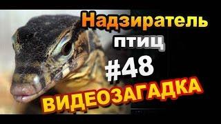Видео загадка #48. Назовите надзирателя птиц