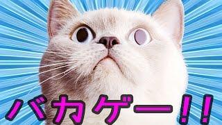 部屋の破壊神「猫」 - バカゲー 実況プレイ