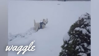Dogs Trying to Bury Things   Funny Dog Fails