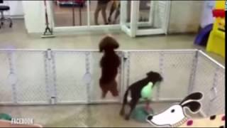 Dancing Dog Excited To See Its Owner