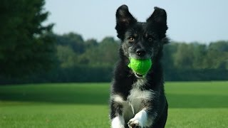The Basic Commands For Dog Training