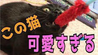 【この猫何者?】人懐っこい黒子猫が可愛すぎる!! thumbnail