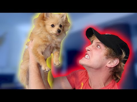 Thumbnail: I HATE MY DOG.