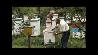 PČELARSTVO GORNJEG PODRINJA (SRB)