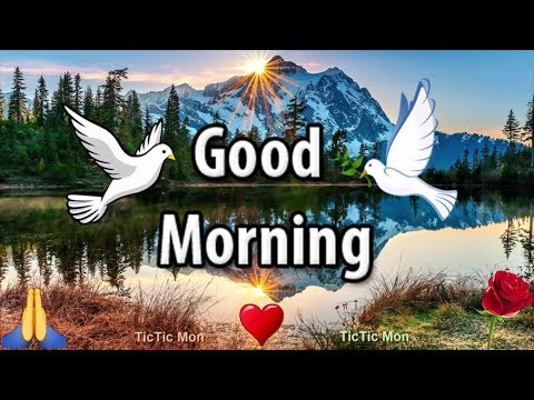 Good Morning WhatsApp Status Video ♥️ TicTic Mon