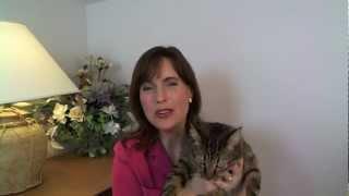 Cat Toilet Training with Litter Kwitter