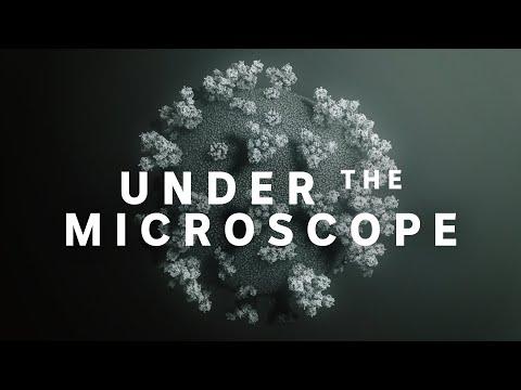 Coronavirus: Under The Microscope   ABC News