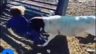 Смешное видео с участием животных