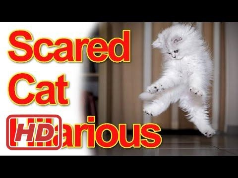 Hilarious Scared Cats Compilation