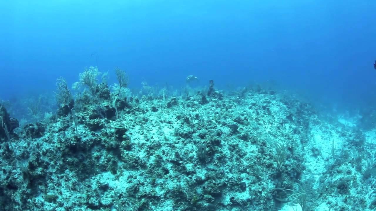 Bajo el mar hd nosoloapnea en youtube - Fotos fondo del mar ...