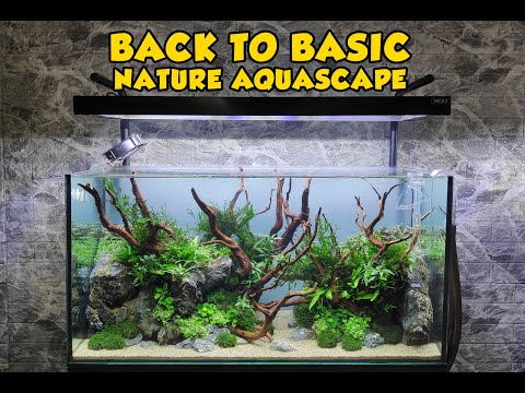 back-to-basic---natural-aquascape-||-aquascaping-tutorial