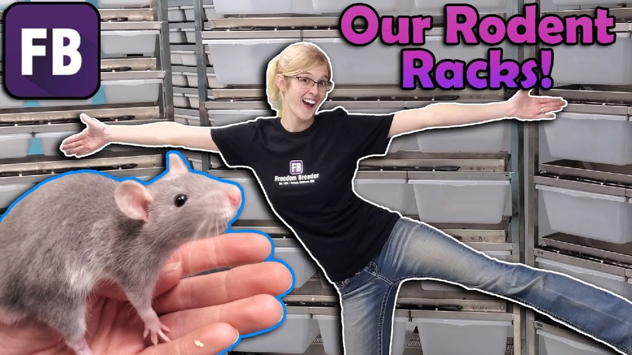 Our Rodent Breeding Setup!