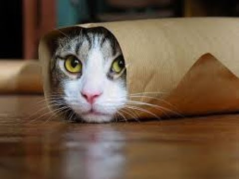 Funny Cats Will Make You Laugh For Hours!!! (Funny Cat Compilation, Clean, No Swearing)