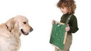 Dog Training | Dog Camp Dog Training| Dog Training Video